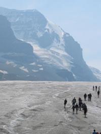 Columbia Icefields Photo