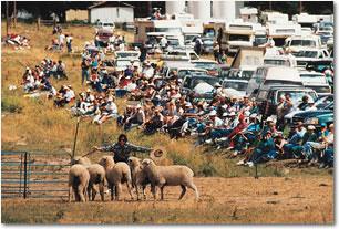 Meeker Classic, Colorado Sheepdog Showdown