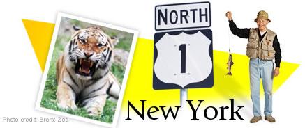 New York Header Graphic
