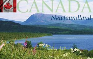 Newfoundland Canada Graphic