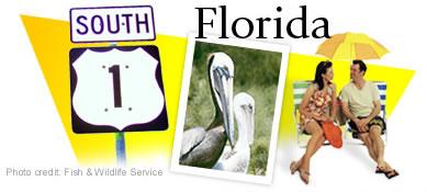 US Route 1 Through Florida Graphic