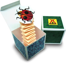 Bug-in-a-Box Craft Project